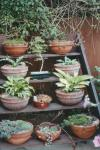 Plant steps. A display stand for pots of plants.
