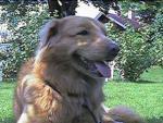 Arak. Nice doggie